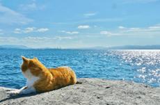 海外からの観光客も多い日本の「猫島」とは?
