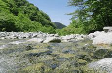 日本で最も「水質が良い」川とは?